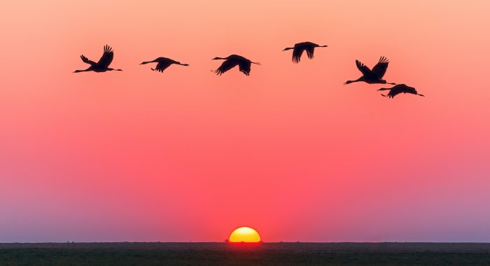 Coming up... (picture of sunrise with birds flying high)